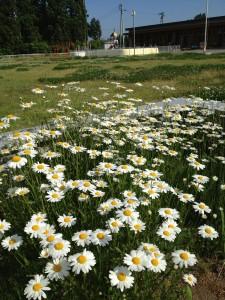 今日の花は暑そうに見える