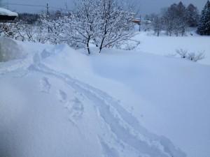裏庭でスノーシューしてきた。