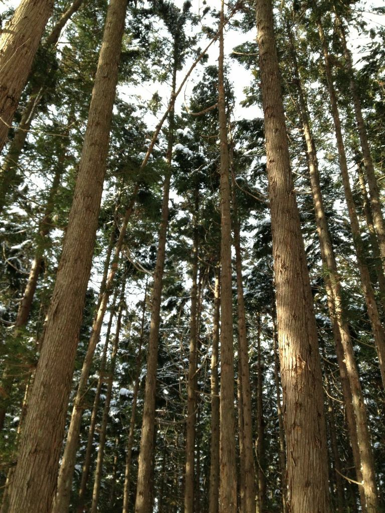 杉林を抜けると