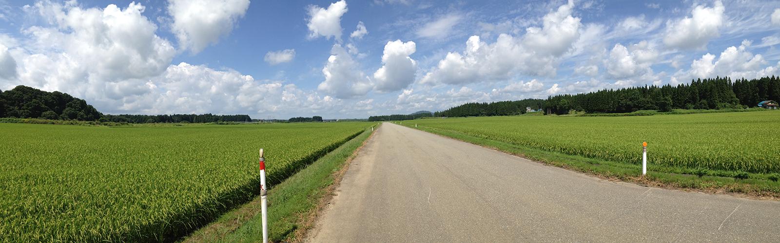 大仙市土川の田んぼ道