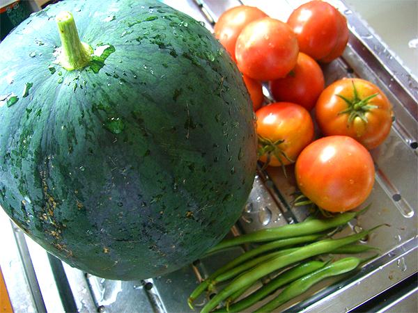 スイカとトマトの収穫