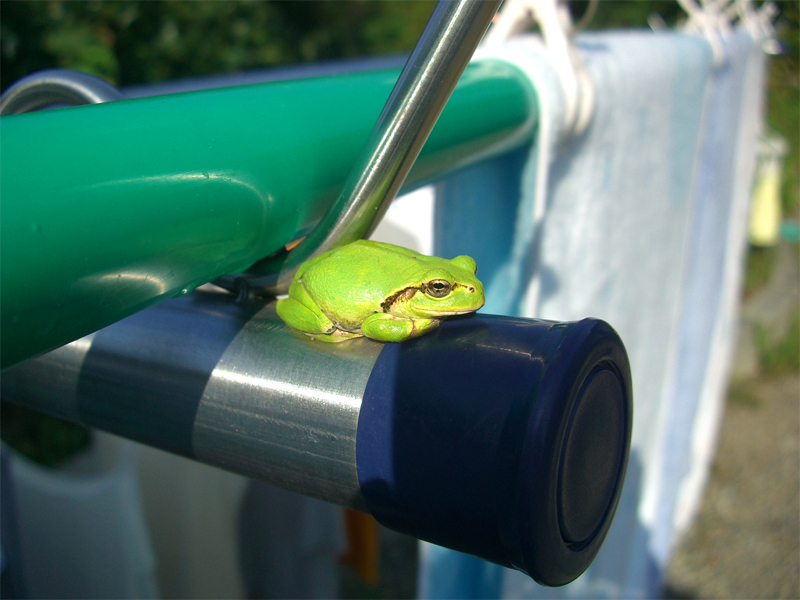 カエルの日向ぼっこ