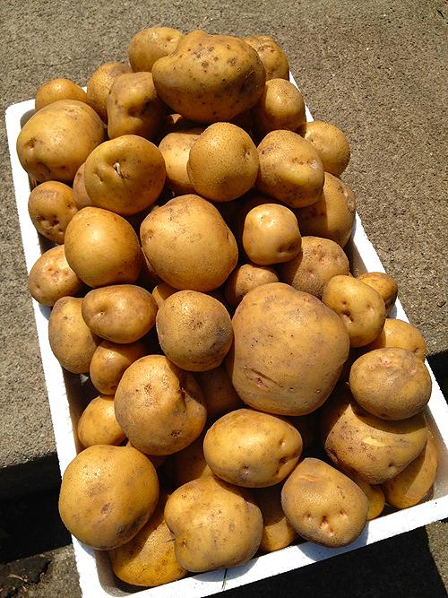 kowakubi potato